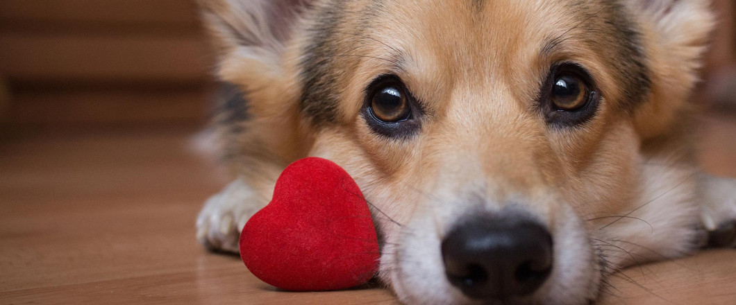 Warrick Humane Society wishes you a Happy Valentine's Day!